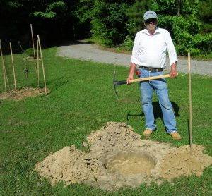 Preparing the hole for the Stellar cherry tree